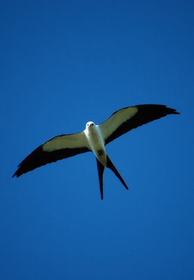 A white bird flying against the blue sky